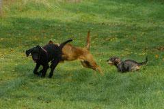 Hundeschulausflug-Sicher auf 4 Pfoten-28.9.13 Foto Nr.13