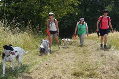 Rheinsteig Impressionen,T-Dogs, 27.07.2013 Bild Nr.7