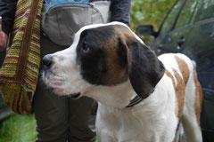 Hundeschulausflug Sicher auf 4 Pfoten, Grüner See, 28.9.14, Foto Nr.3