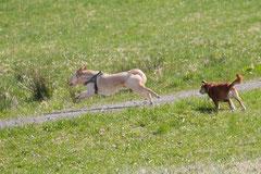 Taunushöhen,T-Dogs,18.4.2015 Foto Nr.2