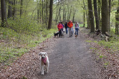 Taunushöhen,T-Dogs,18.4.2015 Foto Nr.3