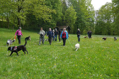 Rhön Frühlingserwachen,T-Dogs,3.+4.5.2014, Foto Nr.13