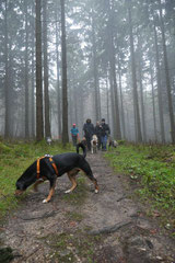 Herzberg und Limes,T-Dogs,6.12.2014, Foto Nr.15