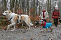Hofheimer Kapellenberg,T-Dogs,15.12.2013, Foto Nr.10
