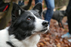 Hofheimer Kapellenberg,T-Dogs,15.12.2013, Foto Nr.21