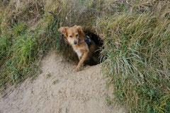 Bensheimer Weinlagen, T-Dogs, 25.1.14, Foto Nr.17