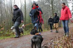Schnuppertour Bleibeskopf,T-Dogs,14.12.2013, Foto Nr.3