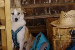 Irrbachquelle,T-Dogs, 13.7.2013, Foto Nr.18