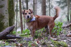 Taunushöhen,T-Dogs,18.4.2015 Foto Nr.22