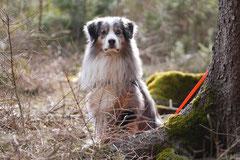 Drachenwege, T-Dogs, 8.3.2015 Foto Nr.20