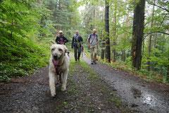 Drachenwege 2,T-Dogs,31.8.2014, Foto Nr.4