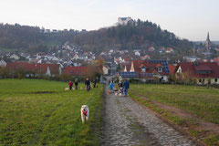 Fischbachtal,T-Dogs,23.11.2014, Foto Nr.17