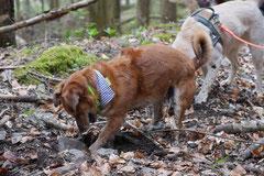 Taunushöhen,T-Dogs,18.4.2015 Foto Nr.21