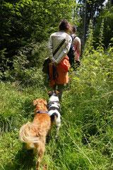 Grünwiesenweiher, T-Dogs, 6.7.14, Foto Nr.15