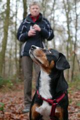 Hofheimer Kapellenberg,T-Dogs,15.12.2013, Foto Nr.18