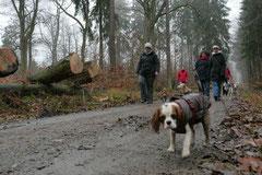 Schnuppertour Bleibeskopf,T-Dogs,14.12.2013, Foto Nr.12