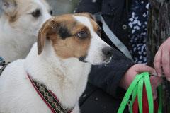 Schnuppertour Gimbacher Hof,T-Dogs,31.1.2015 Foto Nr.6