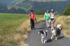 Rheinsteig Impressionen,T-Dogs, 27.07.2013 Bild Nr.2