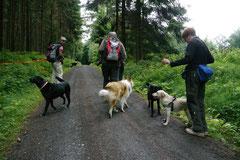 Rund um den Zacken, Trekking-Dogs,30.6.13, Foto Nr.5
