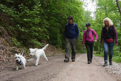 Himmelssteig+Mühlenweg,T-Dogs,10.5.14,Foto Nr.2