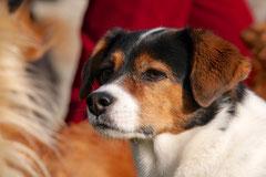 Bensheimer Weinlagen,T-Dogs,22.11.2014, Foto Nr.10