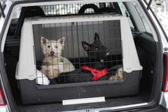 Nele Neuhaus Krimi Tour, T-Dogs, 1.2.2015 Foto Nr.2