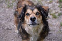 Assmannshäuser Höllenberg, T-Dogs, 17.5.2015 Foto Nr.6