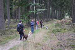 Kapersburg+Winterstein, T-Dogs, 5.10.2014, Foto Nr. 7