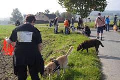 Grünwiesenweiher Welttierschutztag, T-Dogs, 4.10.2014 Foto Nr.3