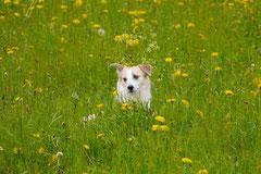 Rhön Frühlingserwachen,T-Dogs,3.+4.5.2014, Foto Nr.30
