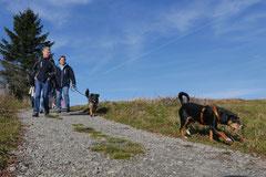 Rhön,Wellness+Wandern,T-Dogs,7.-9.11.2014, Foto Nr.25