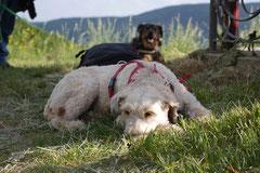 Assmannshäuser Höllenberg, T-Dogs, 17.5.2015 Foto Nr.18