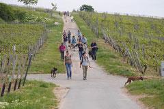 Klosterrunde, T-Dogs,16.5.2015 Foto Nr.2