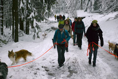 Altkönig,T-Dogs,01.2.2014, Foto Nr.19