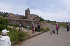Klosterrunde, T-Dogs,16.5.2015 Foto Nr.9