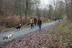 Herzberg und Limes,T-Dogs,6.12.2014, Foto Nr.2