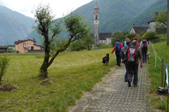 Schweiz-Tessin T-Dogs,Mai 2013, Foto Nr.20