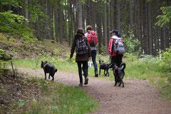 Himmelssteig+Mühlenweg,T-Dogs,10.5.14,Foto Nr.3