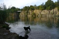 Hundeschulausflug-Sicher auf 4 Pfoten-28.9.13 Foto Nr.5