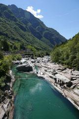 Schweiz-Tessin,T-Dogs,Mai 2014 Foto Nr.41