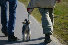 Zur Grube Glück-auf, T-Dogs,9.3.14, Foto Nr.22