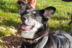 Rhön,Wellness+Wandern,T-Dogs,7.-9.11.2014, Foto Nr.28