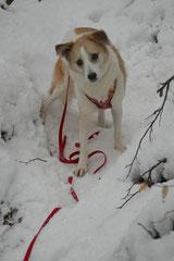 Altkönig,T-Dogs,01.2.2014, Foto Nr.10