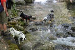 Schweiz-Tessin,T-Dogs,Mai 2014 Foto Nr.4