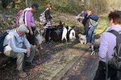 Rheingauen Gebück,T-Dogs,29.+30.3.14, Foto Nr.16