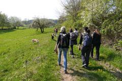 Rund um Lindenfels, T-Dogs,12.4.2014, Foto Nr.16