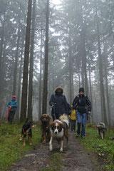 Herzberg und Limes,T-Dogs,6.12.2014, Foto Nr.16