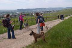 Klosterrunde, T-Dogs,16.5.2015 Foto Nr.6