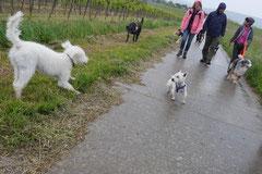 Himmelssteig+Mühlenweg,T-Dogs,10.5.14,Foto Nr.25