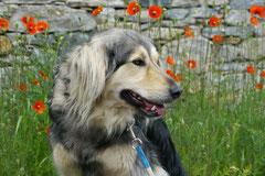 Schweiz-Tessin T-Dogs,Mai 2013, Foto Nr.26